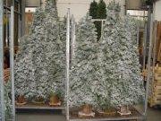Bomen met sneeuw